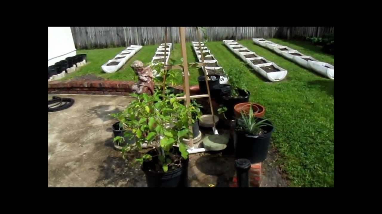 Vegetable Gardening South Florida Style Youtube