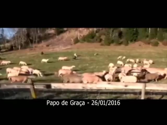 As ovelhas de Jesus não reconhecem a voz (lógica relacional) de estranhos!