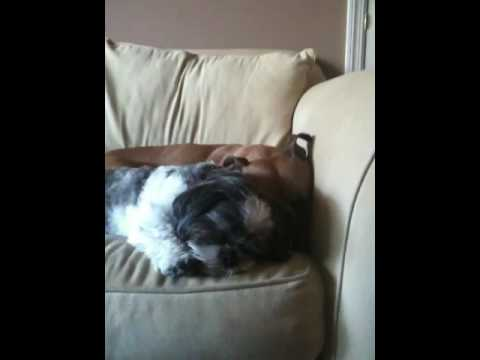 Sleeping / snoring dogs