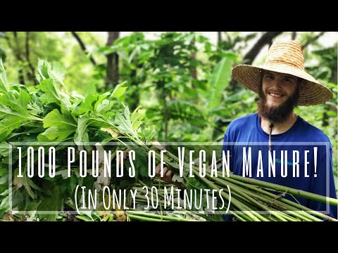 1000 POUNDS of VEGAN MANURE in 30 Minutes!!! Mexican Sunflower Chop & Haul