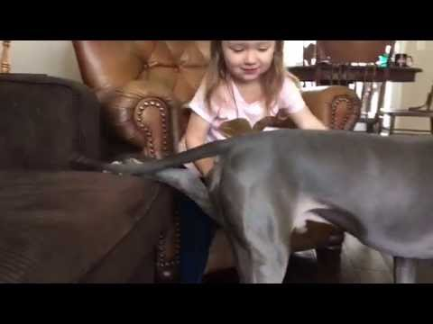 Pitbull and Little Girl! SO CUTE!