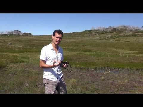 Australian carnivorous plants and bog orchid