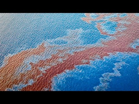 Another Catastrophic Oil Spill Hits Gulf Coast, Corporate Media Completely Ignores It