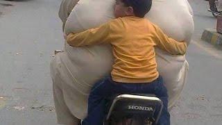 অনিয়মিত খাবার গ্রহন মোটা হওয়ার কারন//Bangla health tips
