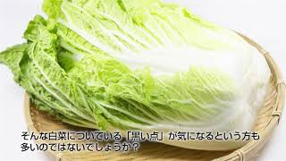 白菜の黒い点ってなんだか知ってますか?