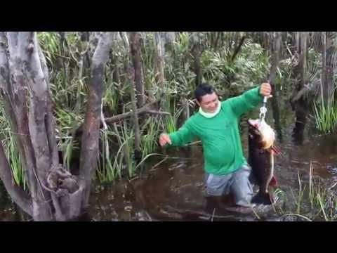 Pescaria De Tucunaré Açú Em Santa Isabel Do Rio Negro - Rio Jurubaixi