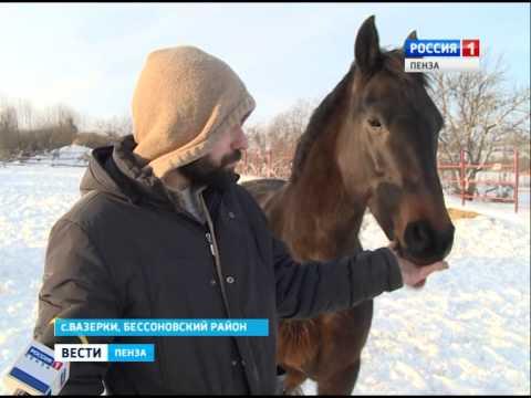 В Пензе построили конюшню для лошадей кадетской школы