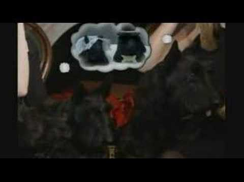 Stupidest Video Ever?   Dog Barneys Holiday Video