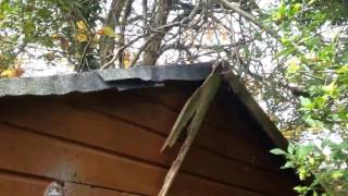 SHED Roof Handyman DIY  TIPS  Repair part 1
