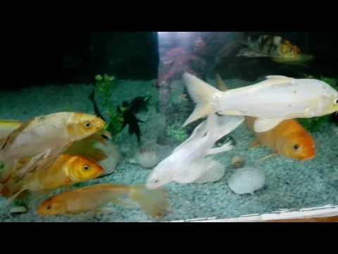 Marine Aquarium of Bangobondhu Safari Park, Gazipur, Bangladesh