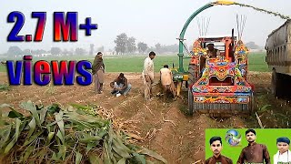 Corn Silage Harvesting with Celmak Stationary Silage Machine IN PAKSTIN LAYYAH 2019 NS DESI CHANNEL