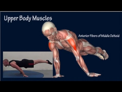 How to Planche Progression Muscle Anatomy Training Program EasyFlexibi...