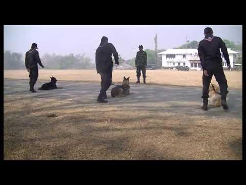 โครงการฝึกสุนัขทหารตรวจค้นยาเสพติด (โครงการ B-9)