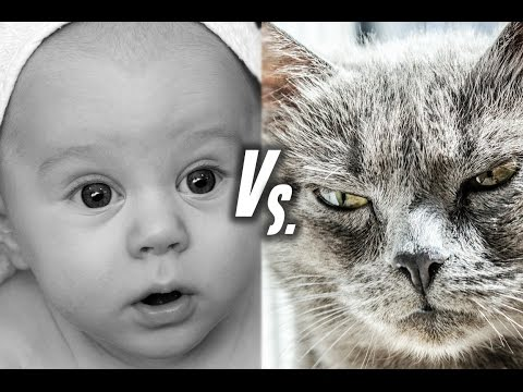 Cats Vs. Babies