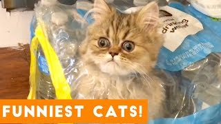 Try Not to Laugh Ultimate Cat and Kitten Compilation | Funny Pet Videos