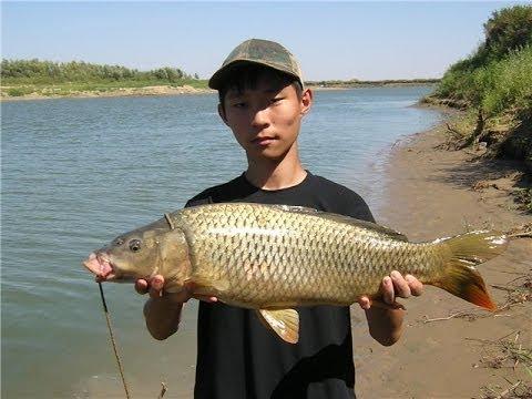 секреты рыбалки ловля дикого сазана на реке РСН Music Videos