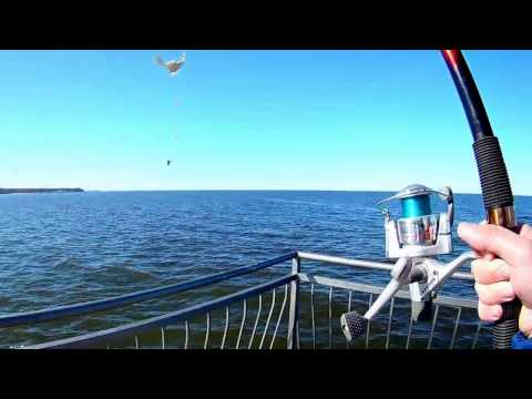 видео рыбалка на балтийском море