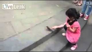 Amazing video funny bird