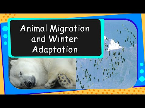 Science - Animal migration and winter adaptations - English