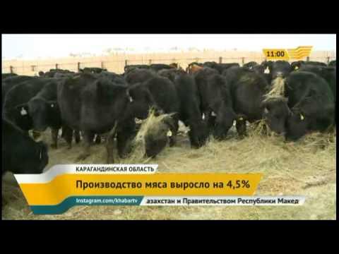 В Карагандинской области растет производства продукции животноводства