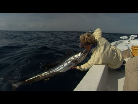 Addictive Fishing: Sailfish Sound - BILLFISH on light tackle