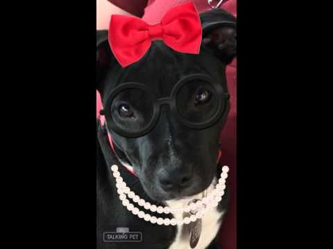 Video of adoptable pet named Texanne