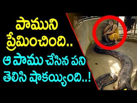 పాముని ప్రేమించింది.. కానీ ఆ పాము చేసిన పని తెలిసి షాకయ్యింది | Amazing Real Love Story with Snake