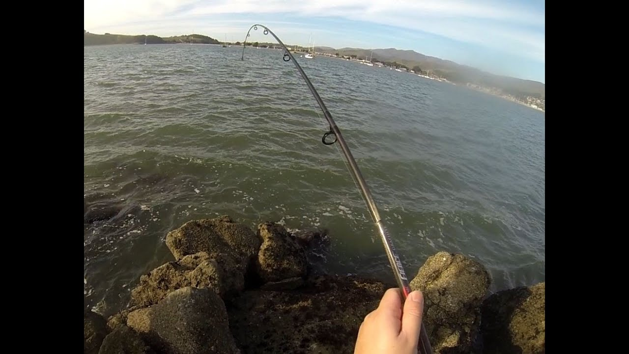 How to lose an eel in 10 seconds fishing box for Half moon bay fishing report