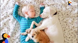Rescue Dog And Her Little Boy Keep Each Other Safe | The Dodo
