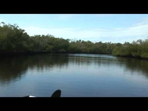 Blackwater River Collier Seminole State Park www radioactivelight com