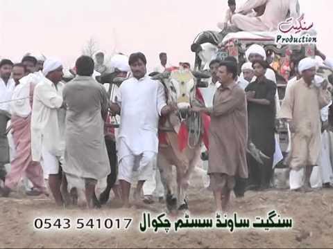 Zahid Mehmood Khoday, Chakwal