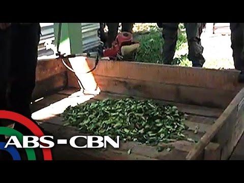 TV Patrol: Cocaine plantation sa border ng Colombia at Panama