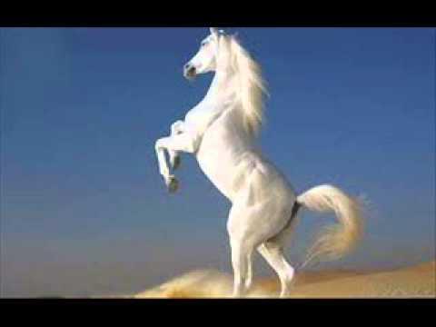 Pro Kuchek 2013 ork.djodji Bend - Vihar 2 = By Dj Romeo Music Videos