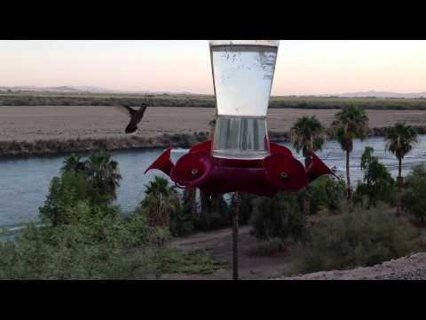 Hummingbirds and jet boats at big River California