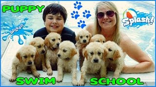 PUPPIES SWIMMING Golden Retriever Puppy Swim School at the Pool