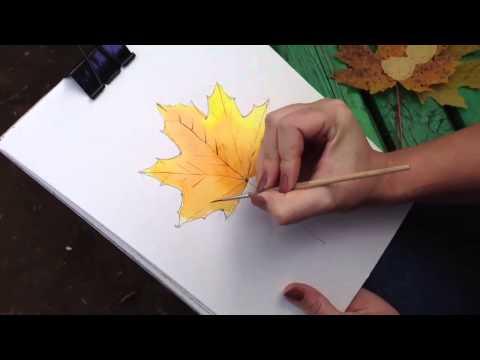 Видео как нарисовать клен