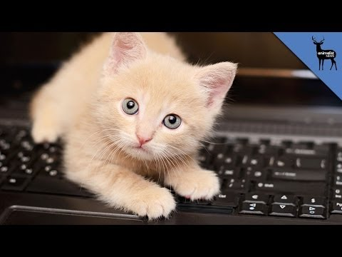 Why Do Cats Rule The Internet?