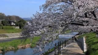 加茂の流れに ハウディのカラオケ・カバー