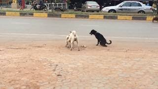 Amazing lovely dog - Street Dogs Are Making A Sweet Love Along The Road