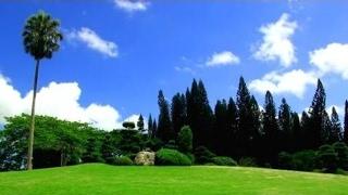 Relaxing Music + Nature Sounds - Relax TV, 3 Hours! l Sen Vàng VTV