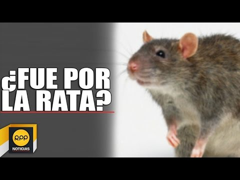 ¿Botaron a Carlos Álvarez del 9 por sketch de la rata en KFC