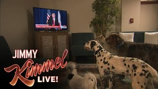 Do Dogs Take Orders From Donald Trump?