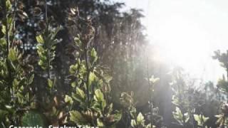 Tabu - CocoRosie - Smokey Taboo