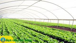 Kiến thức xây dựng mô hình trồng rau an toàn theo tiêu chuẩn VietGap