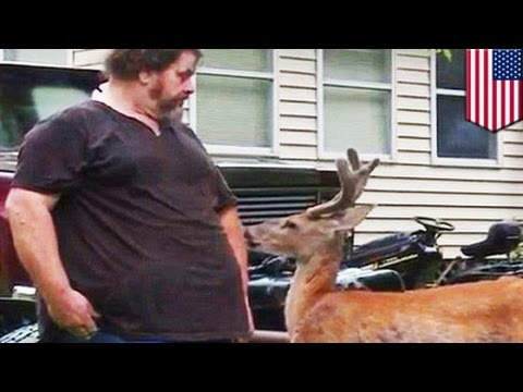 Exotic Pets: Man Living With Deer Fined $300 For Keeping Wild Animals At Home - TomoNews