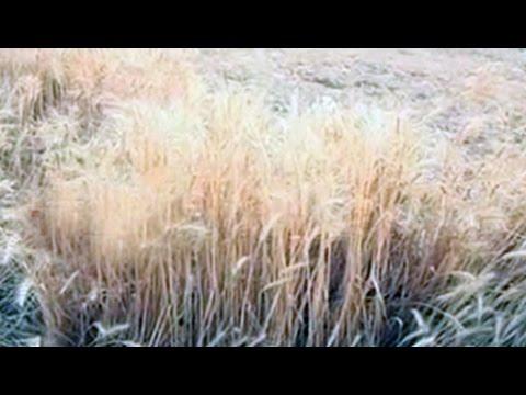 With more unseasonal rains predicted, farmers worried in Madhya Pradesh