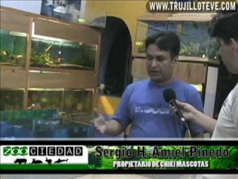 ZOOCIEDAD: ¿Como armar un acuario? (segunda parte) trujilloteve.com