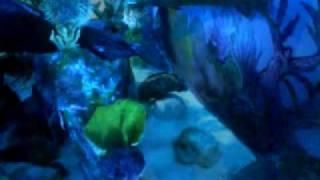 برنامج عالم البحار _ Funny Video