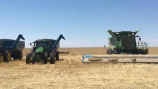 Eastern Colorado wheat harvest