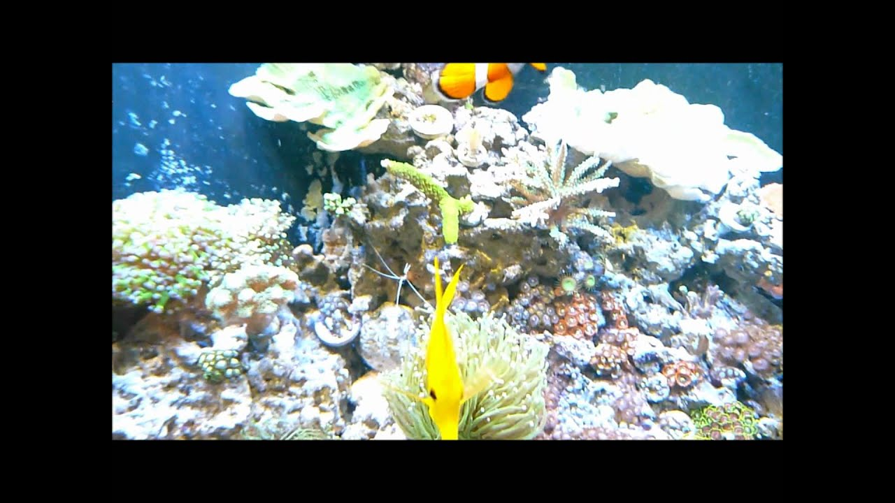 how to catch fish in reef tank